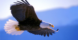 Did Trump Sign an Executive Order to Allow Americans Hunt Bald Eagles?