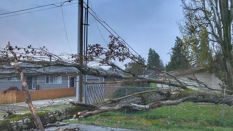 At least 1 Dead and 7 Injured due to a Heavy Windy Storm in Seattle